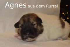 7-Agnes