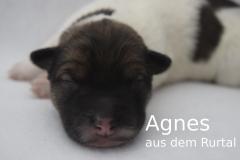 7-Agnes_f