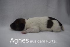7-Agnes_s