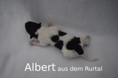 5-Albert