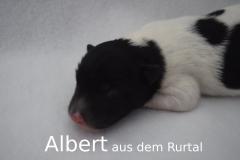 5-Albert_f