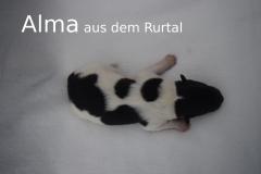 1-Alma