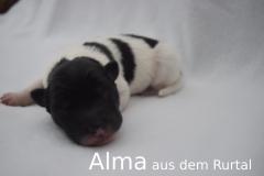 1-Alma_f