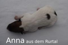 6-Anna