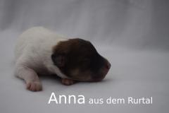 6-Anna_f