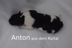 2-Anton