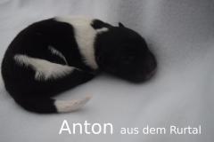 2-Anton_f